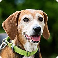 Adopt A Pet :: Gina - Houston, TX