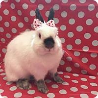 Adopt A Pet :: Suki - Columbus, OH