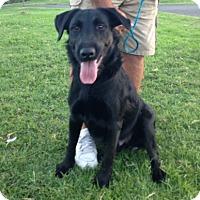 Adopt A Pet :: Preston - Temecula, CA