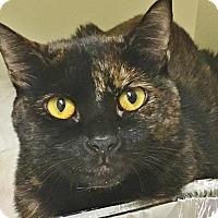 Adopt A Pet :: Rose - Salisbury, MA