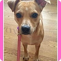 Adopt A Pet :: Claire - Elburn, IL