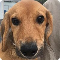 Adopt A Pet :: Drogo - Warrenville, IL