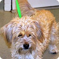 Adopt A Pet :: Chloe - Wildomar, CA