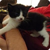 Adopt A Pet :: Mallachi - Austin, TX