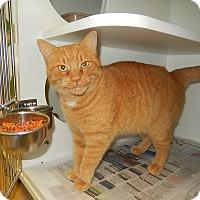Adopt A Pet :: Regina (Petsmart Morehead) - Newport, NC