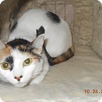 Adopt A Pet :: samantha - haslet, TX