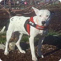Adopt A Pet :: Baby Boy - Yreka, CA