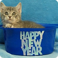 Adopt A Pet :: Sammie - Elkhorn, WI