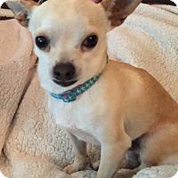 Adopt A Pet :: Rudy - Vacaville, CA