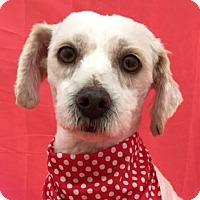 Adopt A Pet :: DORI - pasadena, CA