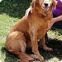 Adopt A Pet :: Maddie - Murdock, FL