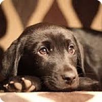 Adopt A Pet :: Tucker - Justin, TX