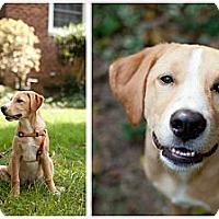 Adopt A Pet :: McFlurry - Richmond, VA