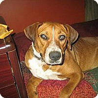 Adopt A Pet :: Ruby - Hilham, TN
