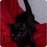Adopt A Pet :: Karly - Lake Charles, LA