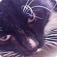 Adopt A Pet :: Justin - Laguna Woods, CA