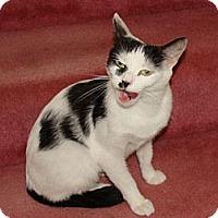 Adopt A Pet :: Bella - Spotsylvania, VA
