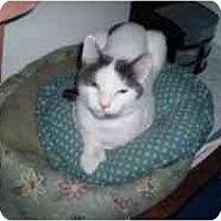 Adopt A Pet :: Roxxy - Hamburg, NY
