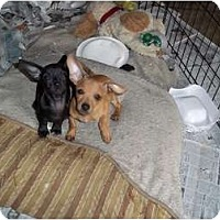 Adopt A Pet :: Clay - Adamsville, TN