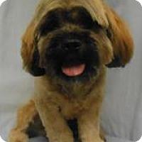 Adopt A Pet :: Scruffy - Gary, IN