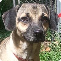 Adopt A Pet :: Spaz (Bella) - Orlando, FL