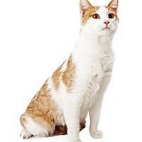 Adopt A Pet :: Bud - Tempe, AZ