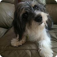 Adopt A Pet :: Charlie Chan - Scottsdale, AZ