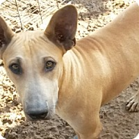 Adopt A Pet :: Anubis - Leming, TX