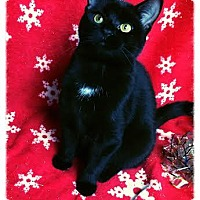 Adopt A Pet :: E Litter - Felicity - Williamston, MI