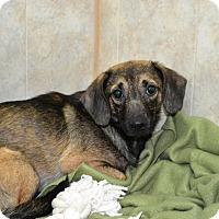 Adopt A Pet :: S/C Eddy - Miami, FL