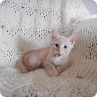 Adopt A Pet :: Graham - Carlisle, PA