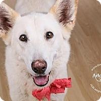 Adopt A Pet :: Ava - Baltimore, MD