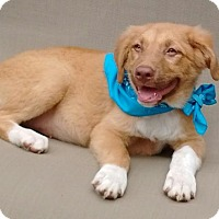 Adopt A Pet :: Baby Girl Rosie - Baileyton, AL
