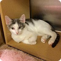 Adopt A Pet :: Aubree - Colmar, PA