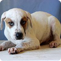 Adopt A Pet :: Barnaby - Waldorf, MD