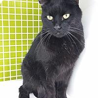 Adopt A Pet :: Cinder - Meridian, ID