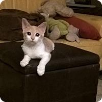 Adopt A Pet :: LeeLee - Brea, CA
