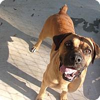 Adopt A Pet :: Travis - Jacksonville, TX