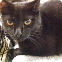 Adopt A Pet :: Jasper - Columbus, OH