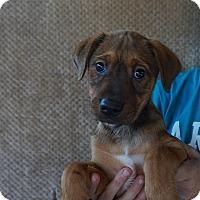 Adopt A Pet :: Zoomie - Oviedo, FL
