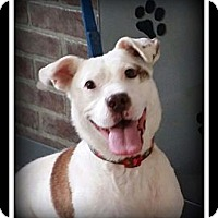 Adopt A Pet :: Paige - Indian Trail, NC