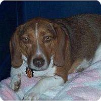 Adopt A Pet :: Tyler - Overland Park, KS