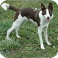 Adopt A Pet :: Bernie--ADOPTED!! - Tiffin, OH