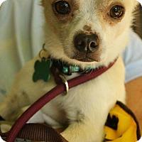 Adopt A Pet :: Gordy - Costa Mesa, CA