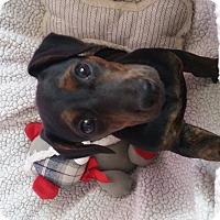 Adopt A Pet :: Toto - Marietta, GA
