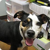 Adopt A Pet :: Bindie - Charlemont, MA