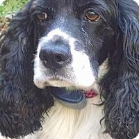 Adopt A Pet :: Xena-D - Hudson, WI