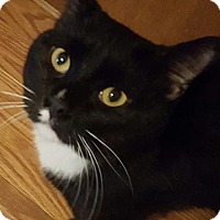 Adopt A Pet :: Chimes - New Bedford, MA