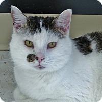 Adopt A Pet :: Phoenix - Chambersburg, PA