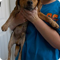 Adopt A Pet :: Guiness - Lewisburg, TN